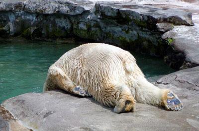 que oso!!! yo si te entiendo manito =(